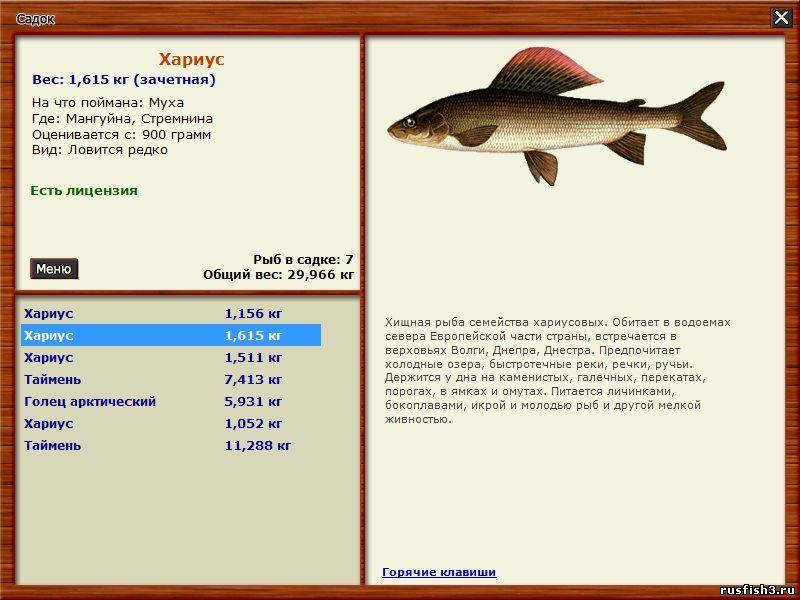 чем лучше ловить хищную рыбу