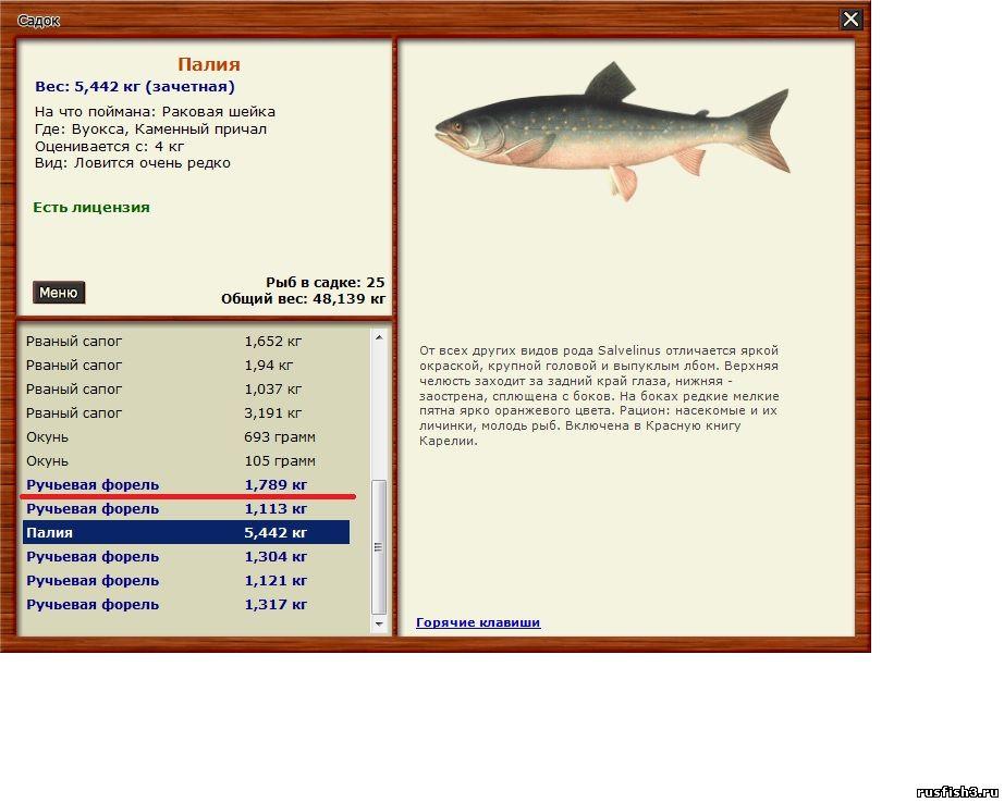 чем ловить рыбу на мели