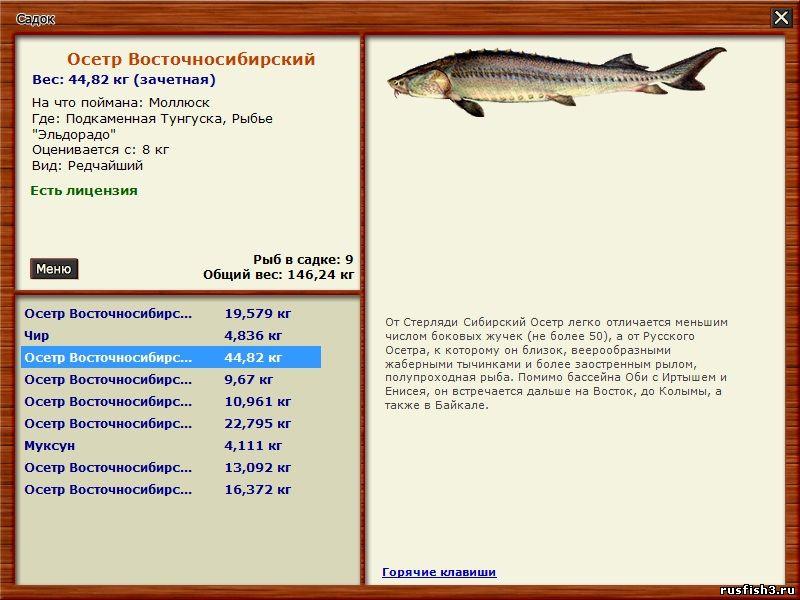 лицензия на ловлю рыбы сетью в пермском крае